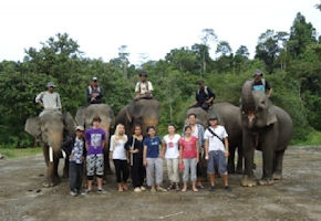 SumatraElephants1.jpg